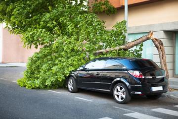 Возмещение ущерба от упавшего на автомобиль дерева — практика судов